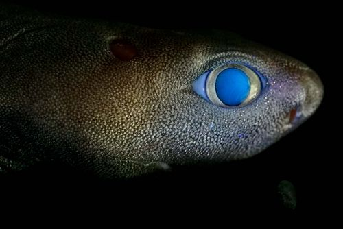 Glow-in-the-dark sharks captured on camera for first time ever