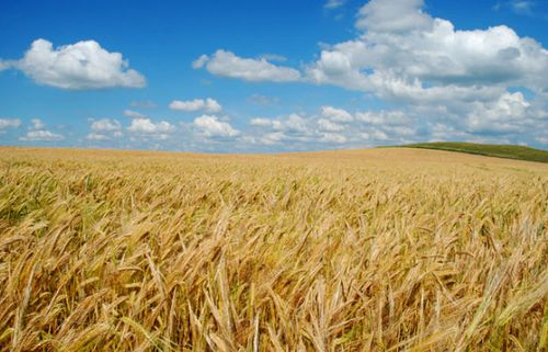 Global yields of barley - a key ingredient for brewing beer - could be hit by a warming climate, experts warn.