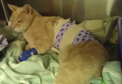Mayor Stubbs is recovering in hospital