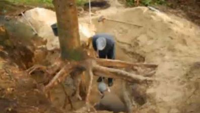 The bounty of 217 gold coins was found under an old pine tree in Lueneburg, Germany.