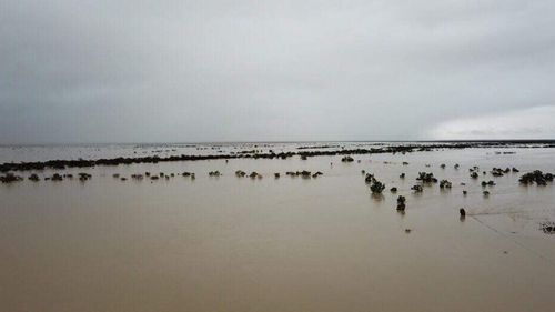 Julia Creek in North Queensland has receieved more than a year's rain in recent days.