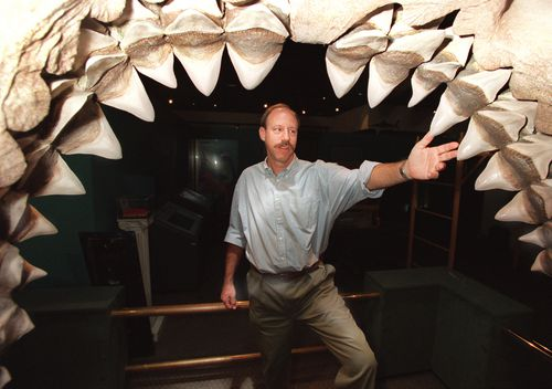 A man stands in the five-foot mouth of a fossil shark jaw. The shark is called Carcharoles Megalodon and was large enough to swallow a small car. (Getty)