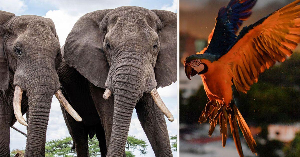 coronavirus: tourism slump sparks wildlife boom for endangered species