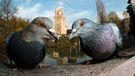 'The guardians'. Category: Urban Birds. Bronze award winner.