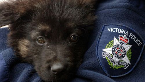 Cop dog finds alleged criminal in abandoned home in Melbourne's south-east