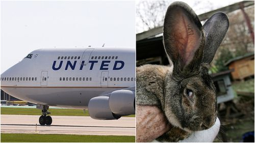 Giant rabbit dies on United Airlines flight from London
