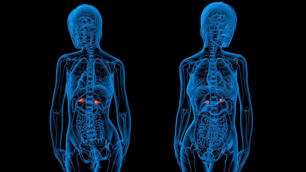 Not sure where your adrenal glands are? Study reveals almost all of ...