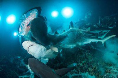 Underwater Photographer of the Year 2019, British Underwater Photographer of the Year 2019: 'The Gauntlet'