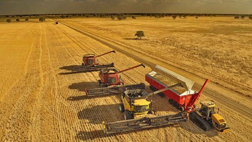 Australian wheat being harvested near Collie, NSW.