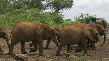 Ban on domestic ivory sales step closer with release of report