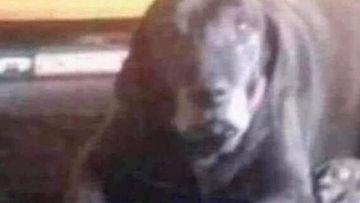 Optical illusion confusion: Do you see a dog or a creepy clown?