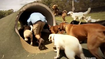Doggy Daycare trainer takes lessons and dog shelter online