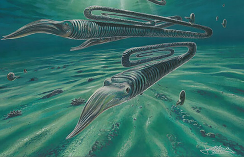 An artist's impression of Diplomoceras maximum