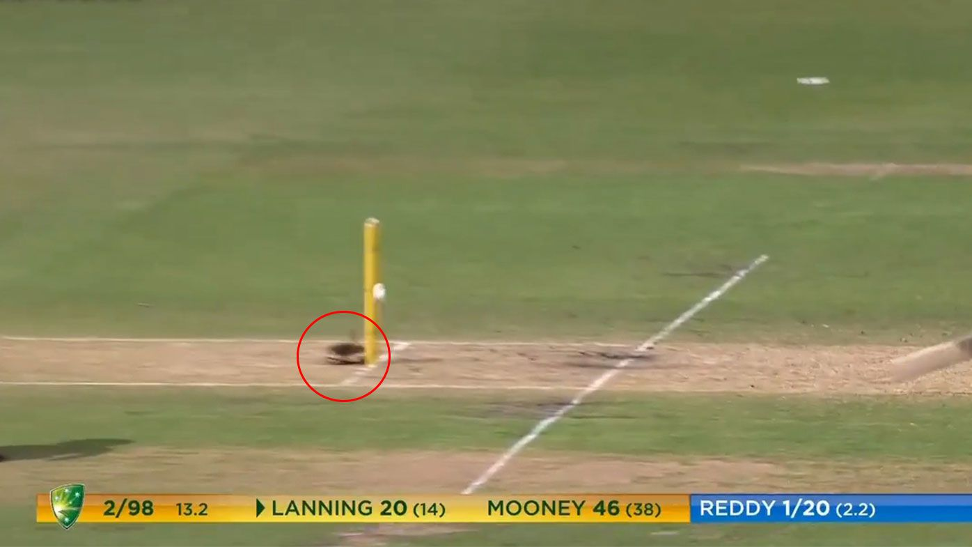 Meg Lanning receives incredible stroke of luck on wacky missed run out in T20 final