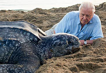 Daily Quiz: For which broadcaster did David Attenborough write Blue Planet II?