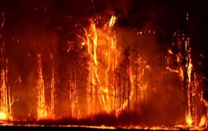 NSW woman charged over alleged bushfire recovery grant fraud