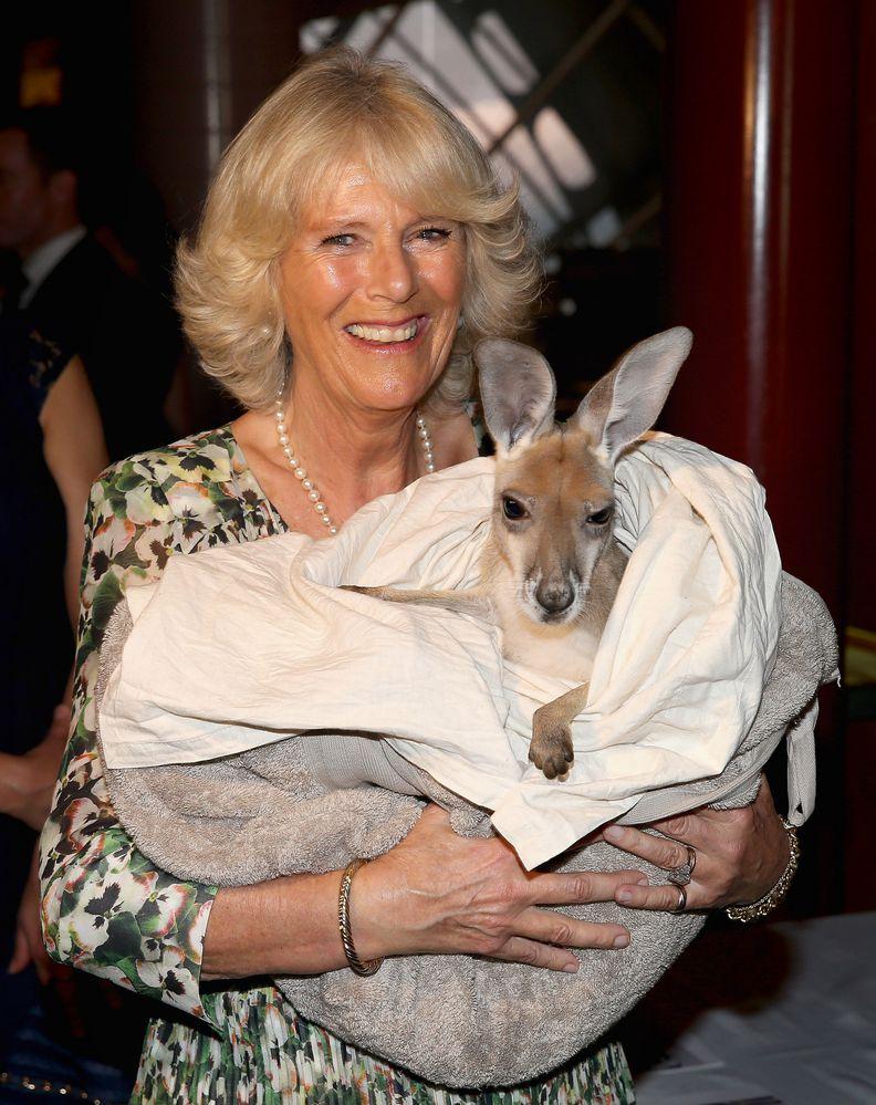 Герцогиня Корнуольская сделала пожертвование в помощь Австралии
