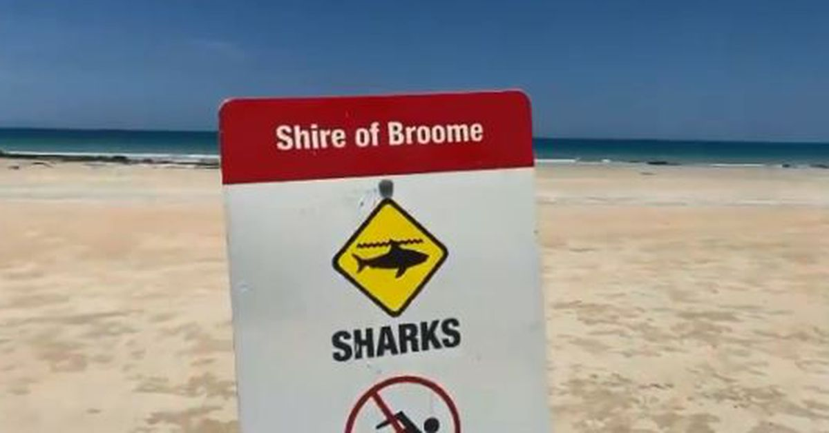Diver bitten by a tiger shark near Cable Beach outside Broome – 9News