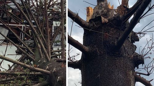 In Harrington, near Taree, a tree believed to be struck by lightning fell came crashing down on a house yesterday.