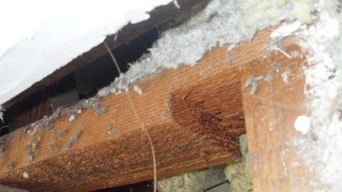 Asbestos is a deadly toxin.