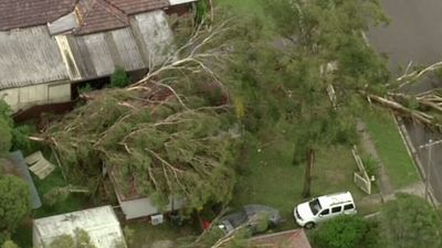 Uprooted trees in Sydney's west.