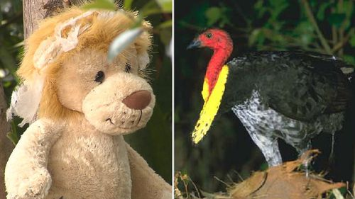 Soft toys have scared bush  turkeys away from a Gold Coast garden. (9NEWS, AAP)