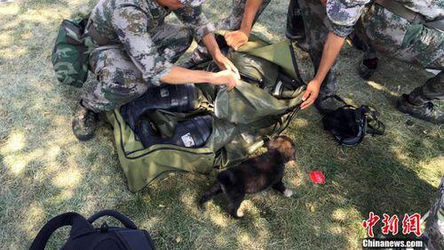 The dog remains with rescue crews. (Chinanews.com)