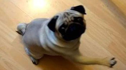 Man convicted of hate crime in UK over filming pug giving Nazi salutes