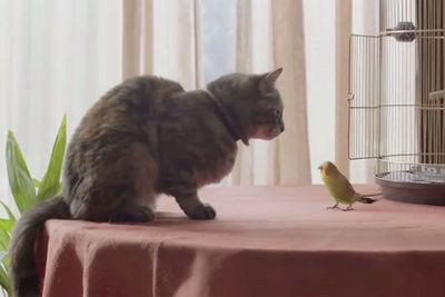 Cat and bird sing heartfelt duet