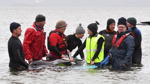 Members of a rescue crew stand with a whale on the sand bar.