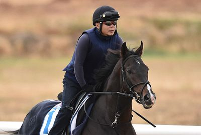 <b>Melbourne Cup favourite Fame Game has eased to $4 with support coming for English horse Trip To Paris.</b><br/><br/>One TAB customer had outlaid $14,500 on the Ed Dunlop-trained Trip To Paris at $8.50 with the second favourite now at $8. As a result, Japanese horse Fame Game has eased from $3.20 while last year's Victoria Derby winner Preferment is the only other runner under double figures at $9.50.<br/><br/>Click through to see the odds and information for all 24 runners in the race that stops the nation. <br/><br/><br/><br/><br/>