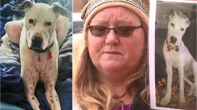 Family dog brutally killed in botched home invasion