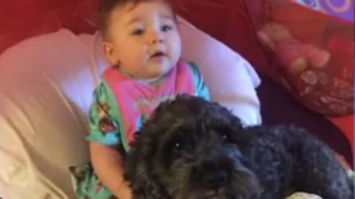 Dog saves baby girl's life in Baltimore house fire