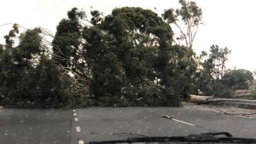 Wild winds trigger chaos across Victoria