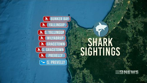 There has been a spike in shark attacks and sightings along the South West coastline in recent months. (9NEWS)