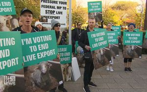 Animal activists fail in bid to stop sheep leaving aboard COVID-19 ship