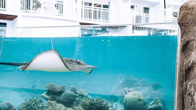 Guests can touch and learn about marine life, and feed Luanne, the sting ray.