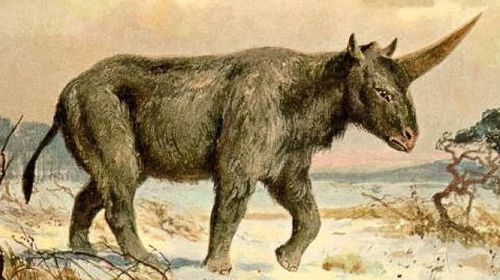 Ancient unicorns lived amongst humans