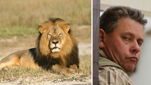 Zimbabwean hunter bailed over killing of Cecil the lion