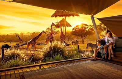 11. Overnight safari at Dubbo's Taronga Western Plains Zoo, NSW