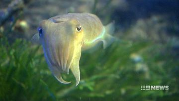 Manly Sea Life Sanctuary to close after 50 years