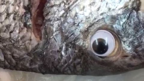 A fish shop has reportedly been shut down after its owners were caught using googly eyes to make their stock look fresher.
