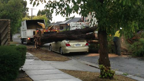 A car was crushed by a tree in Wantirna. (Ryan Kuff)