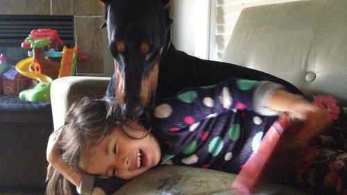 Ms Prucha says Dobermans are sometimes called 'velcro dogs' for their tendency to develop a fondness for one specific person. (Facebook)