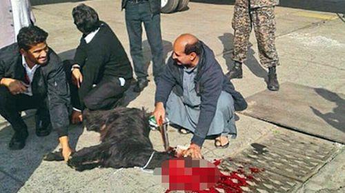 Pakistan's national airline sacrifices goat on tarmac