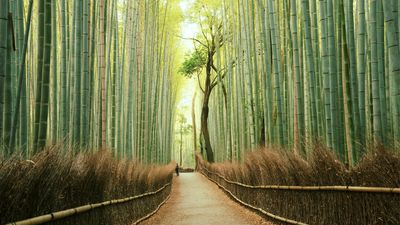 Arashiyama beyond the bamboo