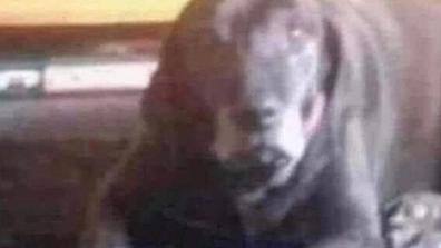 Creepy clown or cute dog, photo baffling the internet.