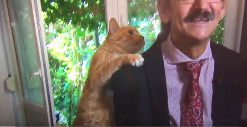 Mr Targalski's furry friend began grooming him during the interview. image: Twitter