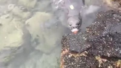 Knife-wielding seal sends message not to litter