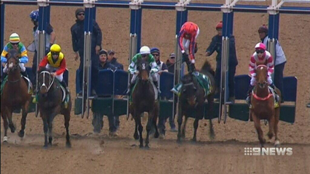 Jockey bounces back